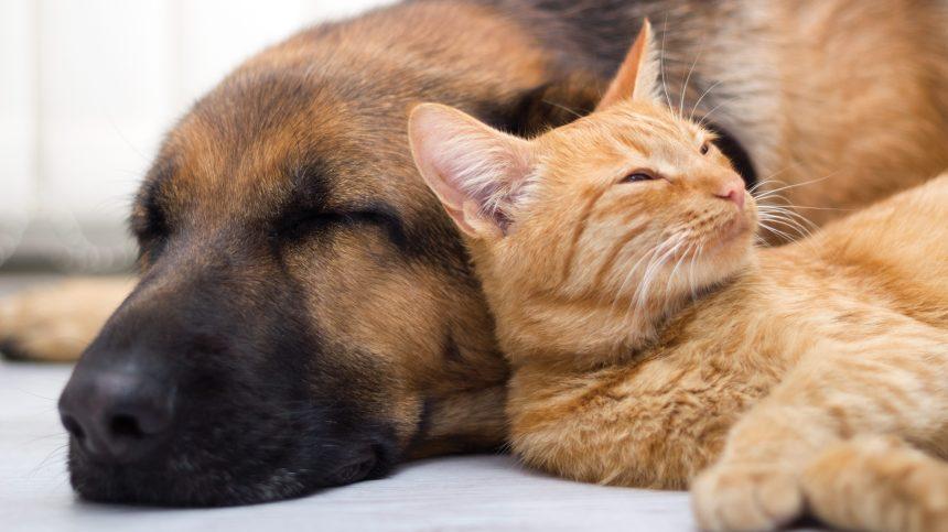 Moins d'abandons d'animaux à la SPCA