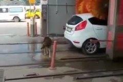 C'est un animal ou c'est une voiture celui-là?