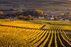Transformez votre road trip dans Charlevoix en visite agricole