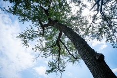 Plus de 900 plantations d'arbres attendus à Verdun