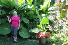 Elle fait pousser son bananier à Montréal