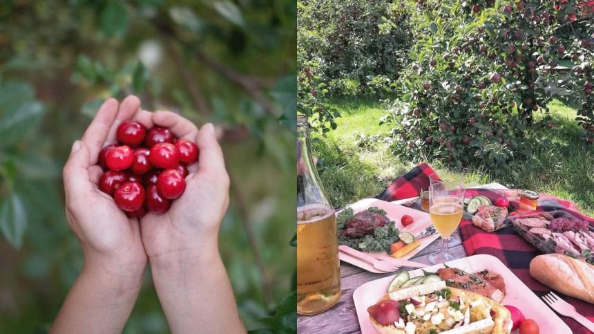 Le verger gourmand et épicurien à visiter à Oka dans les Laurentides