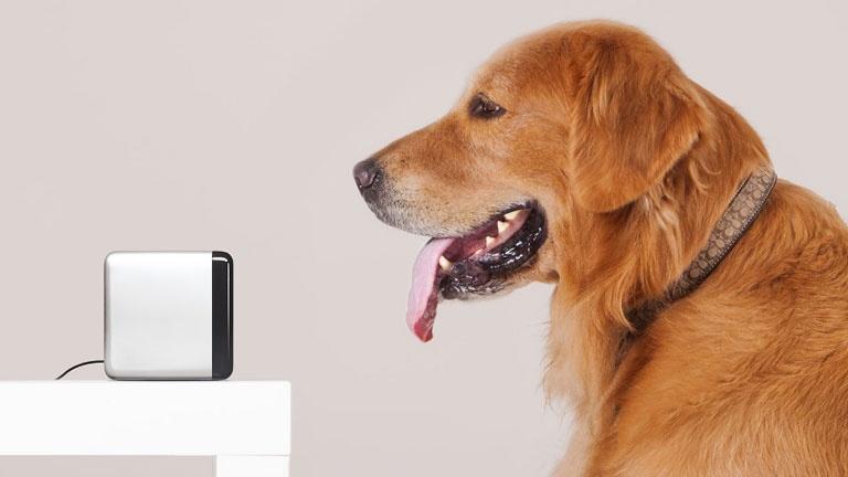 Le gadget qui permet d'interagir avec votre animal à distance