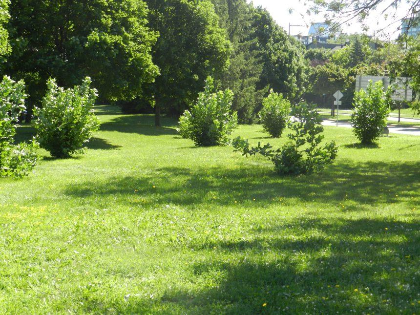 Répertorier les arbres un à unà L'Île-des-Sœurs
