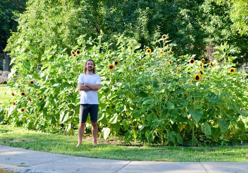 Petit jardin de tournesols et d'asclépiades pour une grande cause