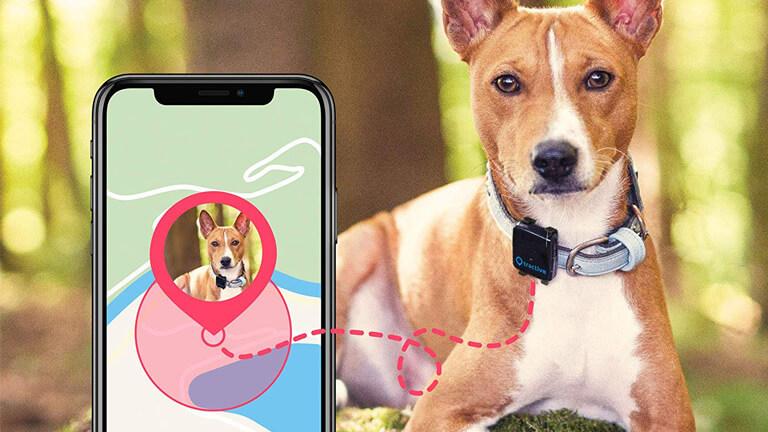 tractive gadget suivi gps animal compagnie