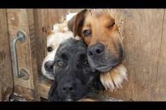 C'est la Journée mondiale des chiens, pourquoi ne pas leur rendre hommage?