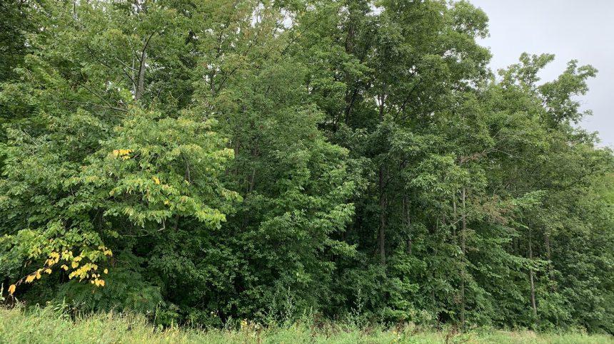 Un boisé privé de Vaudreuil-sur-le-Lac en danger