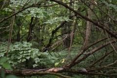 Montréal achète le boisé North Ridge pour son Grand parc de l'ouest