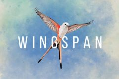 Wingspan, la version numérique officielle sur Steam