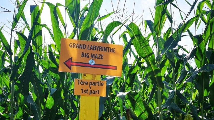 Un immense labyrinthe dans un champ de maïs vous attend à Rawdon