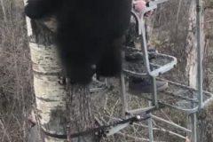 Il ne peut y avoir qu'un seul maître de la forêt