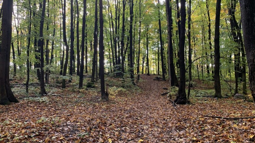 Nouvelle consultation écrite sur la protection du boisé Rousseau
