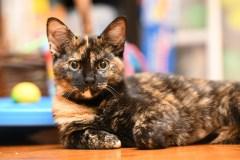 Des bénévoles dévoués pour l'amour des chats de Vaudreuil-Soulanges