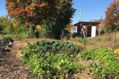 Un jardin communautaire en attendant des logements sociaux
