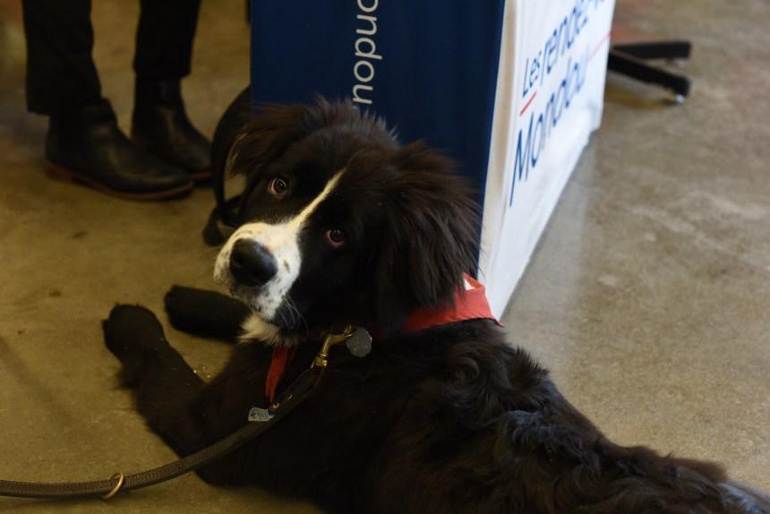 Marcher avec son chien au profit de la fondation MIRA avec la campagne Mondou
