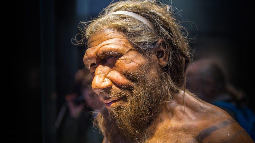 La COVID-19 et l'héritage du Néandertalien