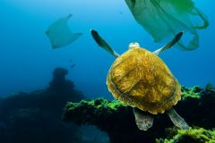 Environnement : une pandémie de plastique