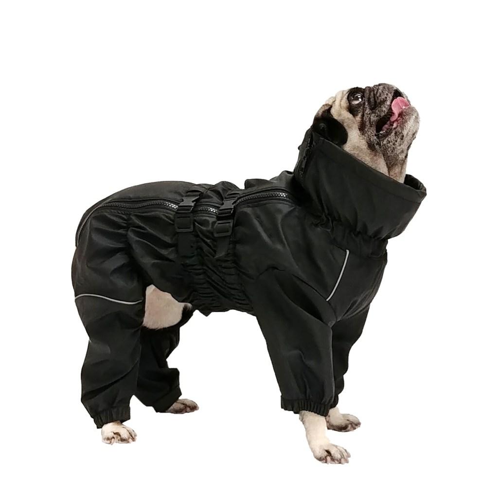 Chien portant un manteau noir