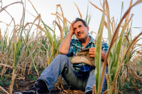 Il existe peu de ressources en santé mentale pour aider les agriculteurs en détresse.