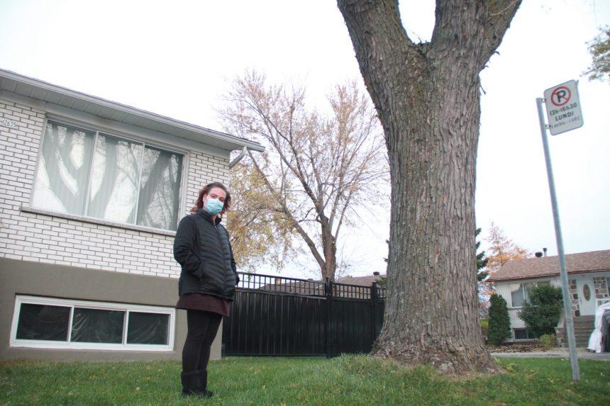Montréal-Nord: pas facile de faire abattre un arbre