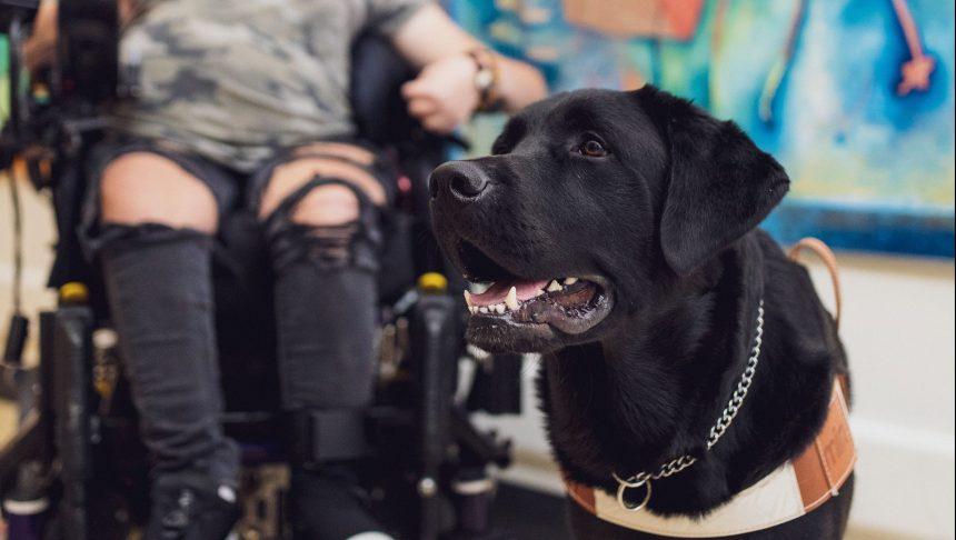 Benelux, un chien auprès des enfants malades