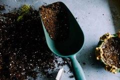 Comment récolter et entreposer ses bulbes après une floraison d'été