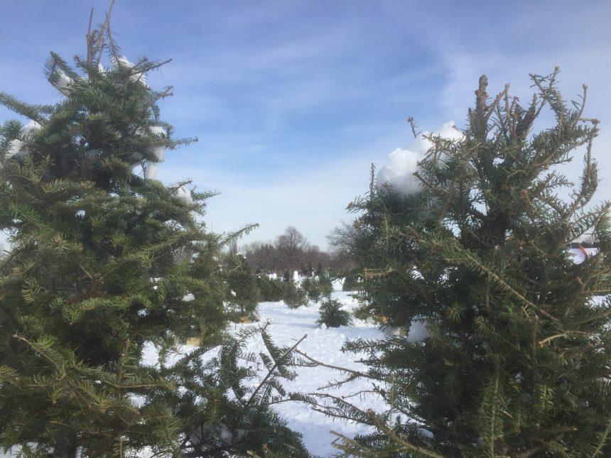 Une forêt éphémère pour des changements durables