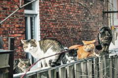 Le nombre de chats errants bondit
