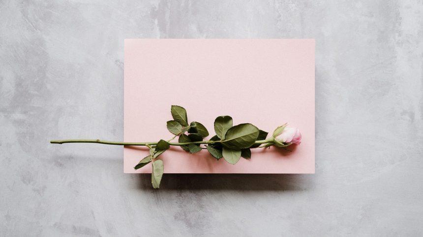 Du rose et des roses pour la Saint-Valentin