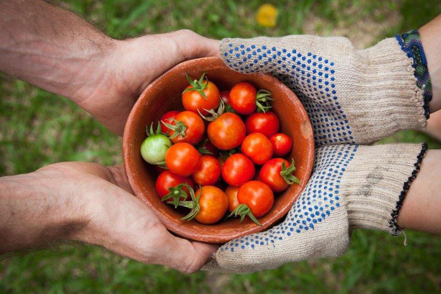 Fergus, un nouveau marché en ligne d'aliments biologiques