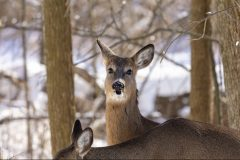 Sécurité: Montréal réclame une interdiction de la chasse