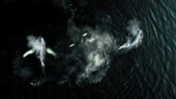 La baleine et le corbeau