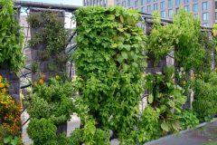 Un diplôme en agriculture urbaine offert sur le Plateau
