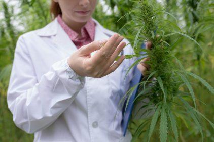 Le CBD ne serait pas un remède contre la dépendance à la cocaïne