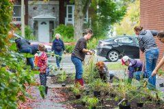 Verdissement: huit nouvelles ruelles vertes verront le jour dans Rosemont