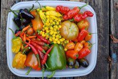 Le jardinage dans un esprit de partage