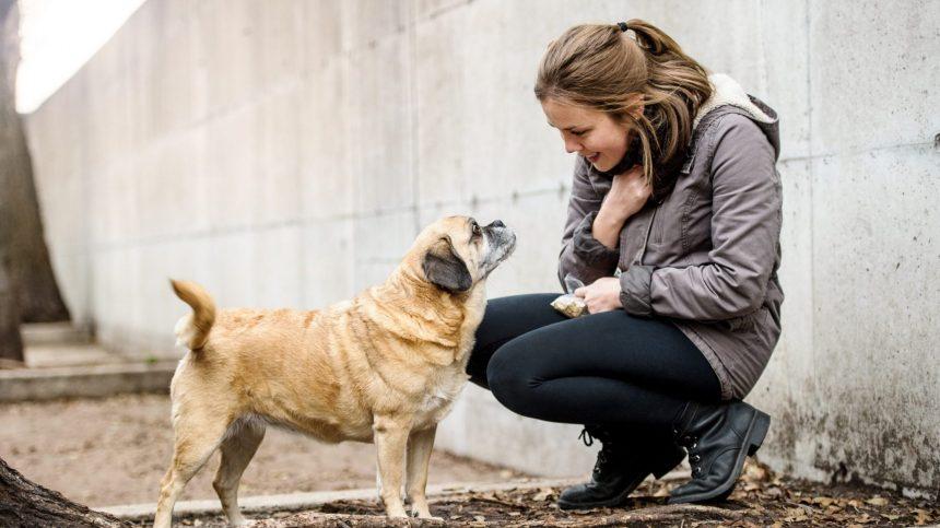 Campagne de micropuçage pour chiens à Lachine