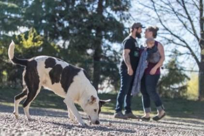 Déjections canines: les propriétaires d'animaux domestiques rappelés à l'ordre