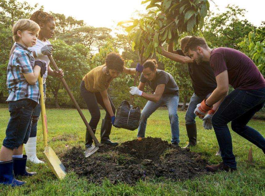 Commander un arbre pour son quartier