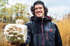 Champignons et décontamination des sols: la voie du futur?