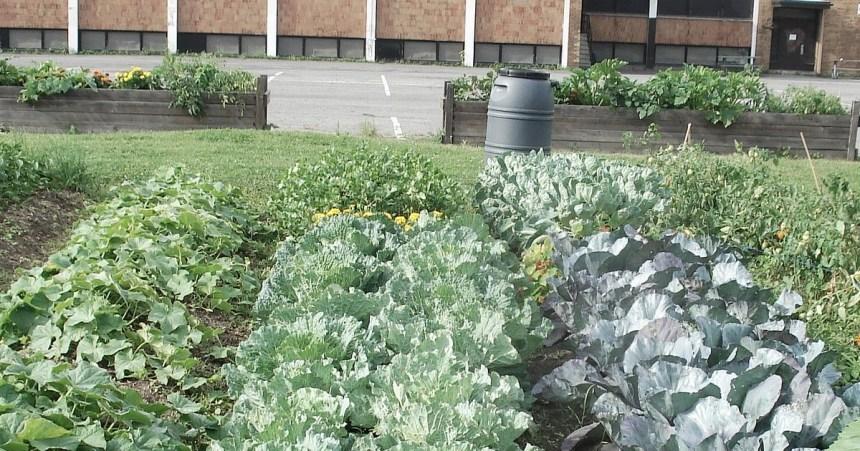 Cultiver ses légumes dans les jardins communautaires