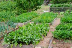 Rosemont–La Petite-Patrie veut faire fleurir les jardins urbains