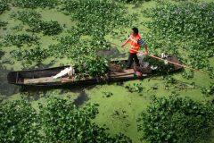 Invasions biologiques: des dommages de plusieurs milliards