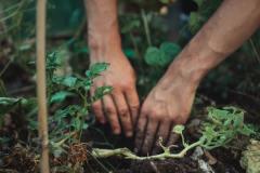 Hortithérapie, ou les bienfaits du jardinage