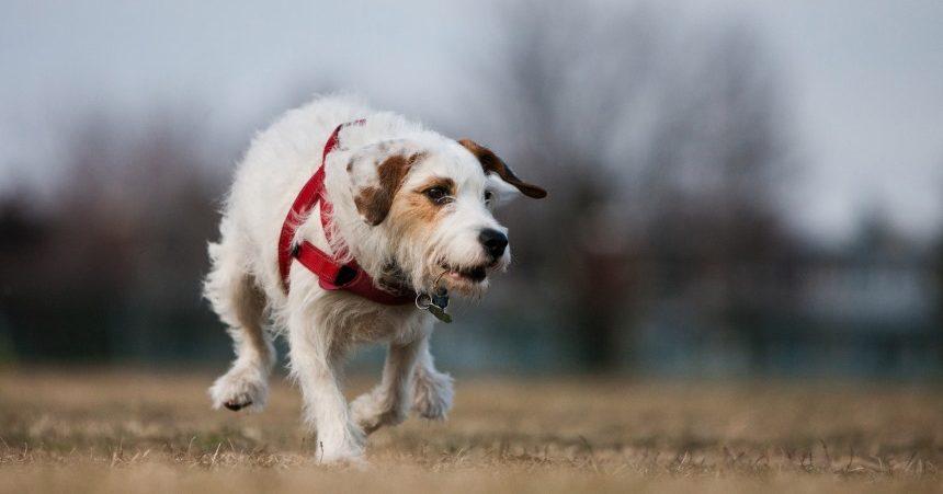 Après des années, toujours en quête d'un emplacement pour un parc à chien