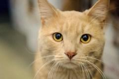 Les refuges d'animaux prévoient une hausse des abandons