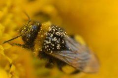 5 fleurs pour nourrir les pollinisateurs