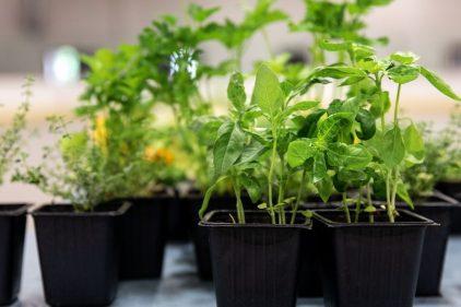 Distribution gratuite de végétaux, de compost et de paillis dans MHM