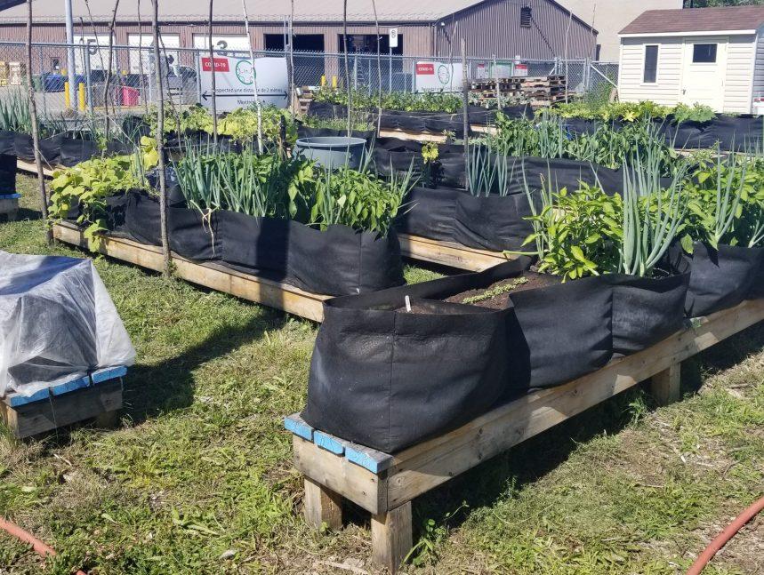 Les Jardins Collectifs de Montréal-Est étendent leur portée